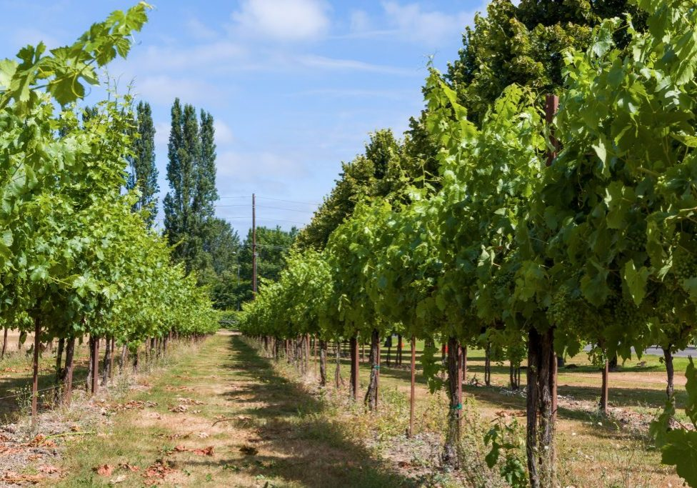 WindermereNorth_Woodinville_Wineries-1024x683